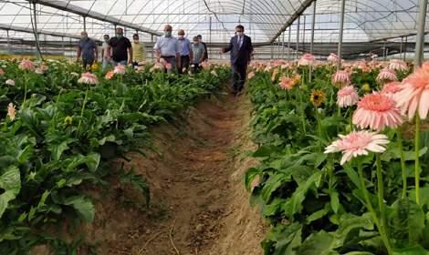 Erbaa çiçek üretim merkezi haline geliyor